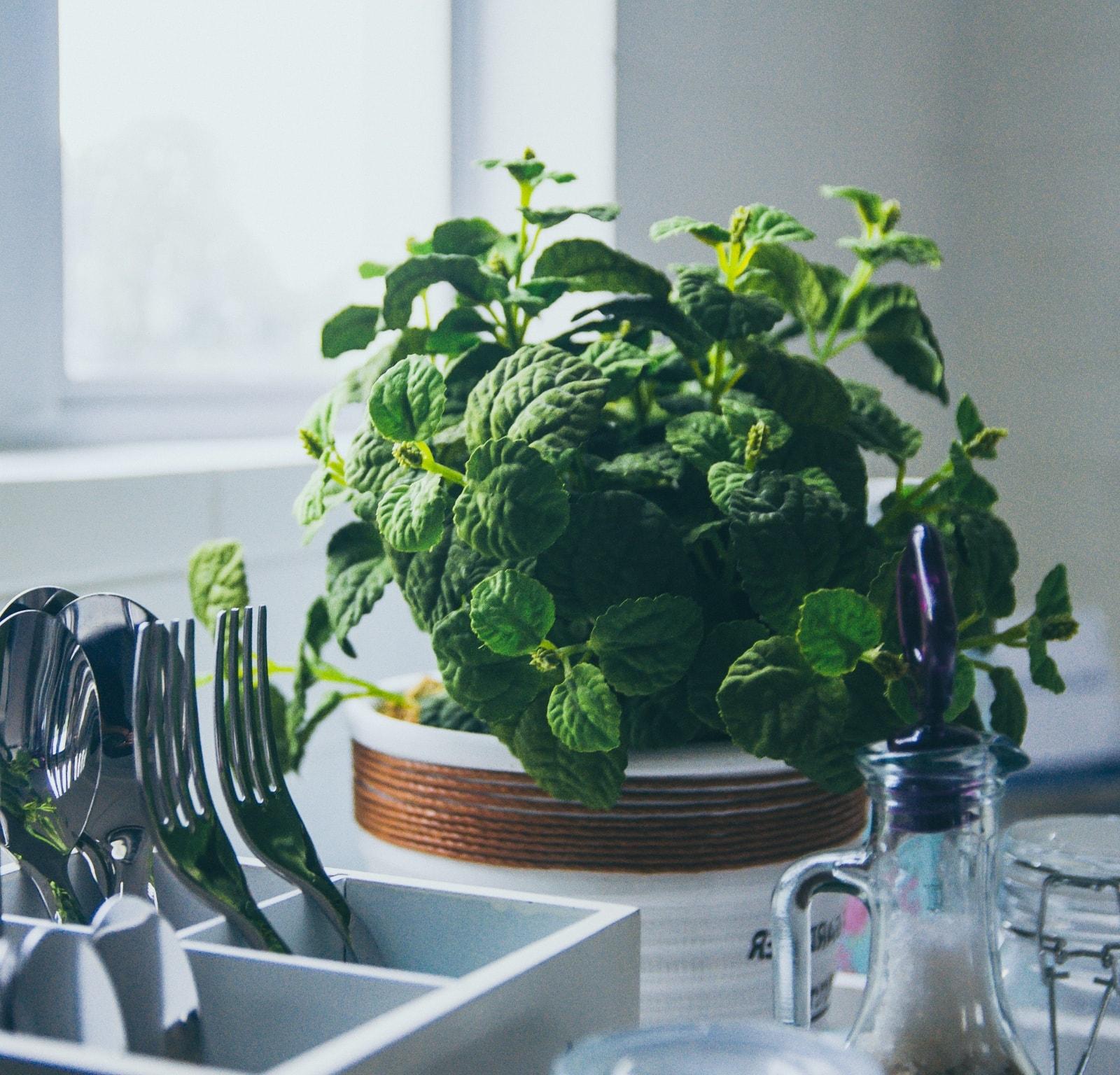 ambientazione con pianta aromatica e oggetti da cucina